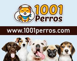 1001 perros - razas de perros